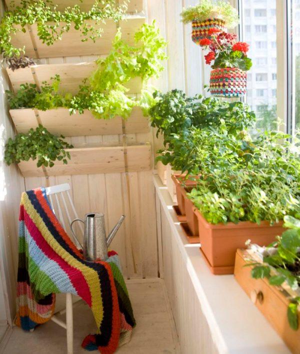 ogorod_na_balkone6