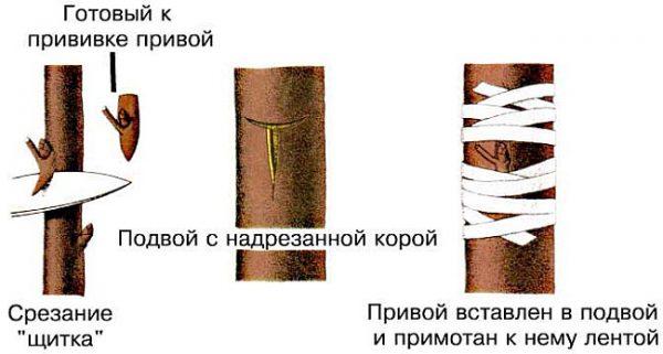podvoy_vesnoy