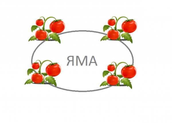 bolyshoy_urozhay_tomatov3