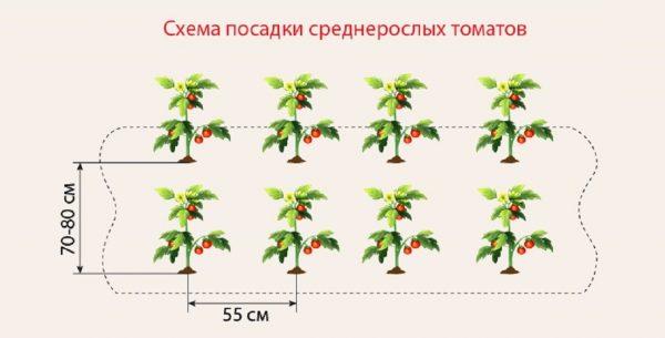 tomati_na_gryadke5