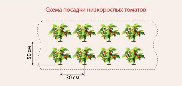 tomati_na_gryadke6