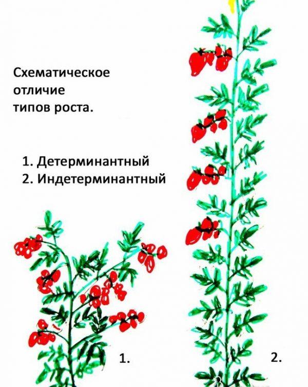 kak_sformirovaty_kust_tomata4