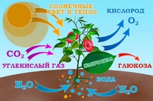 odkormki_rasteniy3