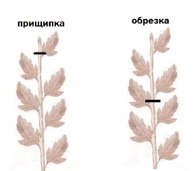raboti_v_iyule2