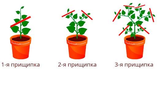 vmesto_petunii4