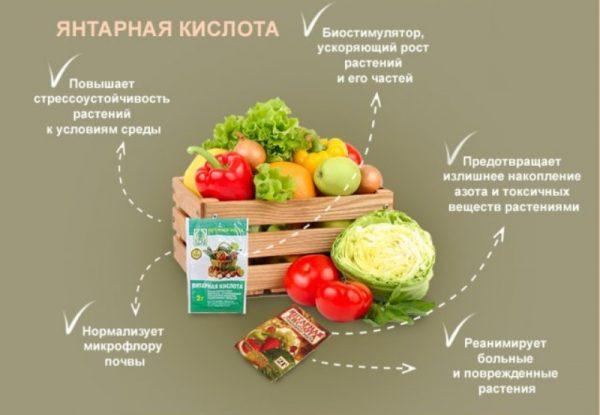 yantarnaya_kislota_na_uchastke