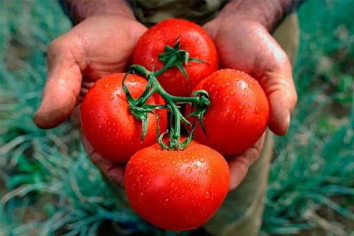 podgotovka_gryadok_pod_pomidori