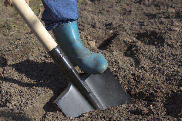 Выкапывать лунки для посадки