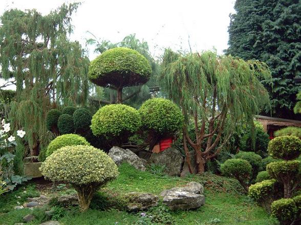 Сад в стиле бонсай