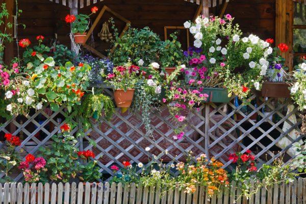 Украшение изгороди горшками с цветами