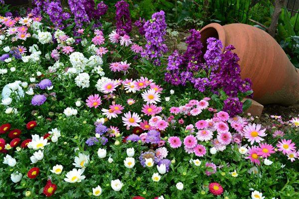 Газон из цветов