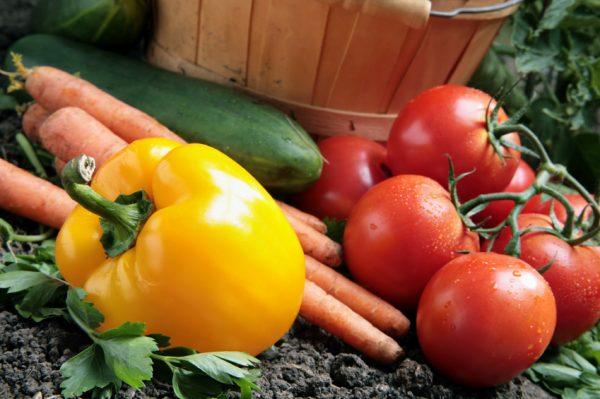 С чем рядом можно сажать помидоры