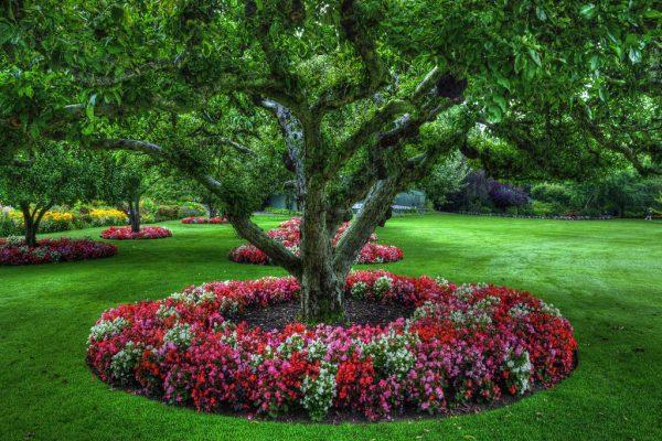 Клумба под деревом