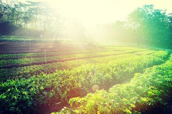 Уберечь растения от солнца