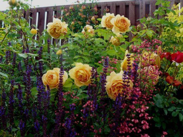 Розы с вертикальными культурами