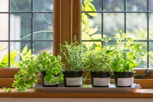 Window-Sill-Herb-Garden-1024x683