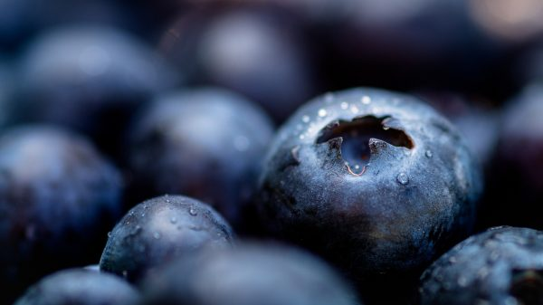 blue-berries-3432295_1920