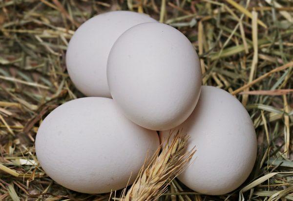 egg-2048476_1920