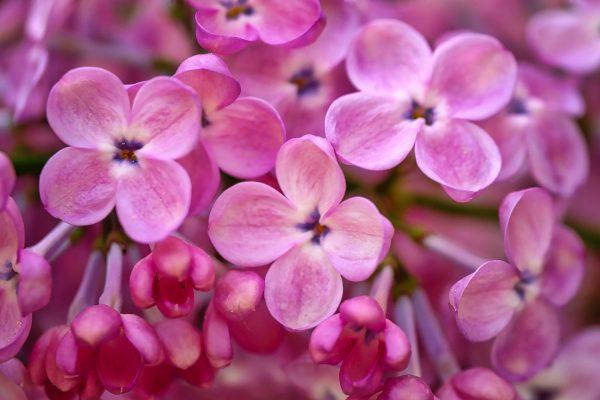 flower-3350929_1920