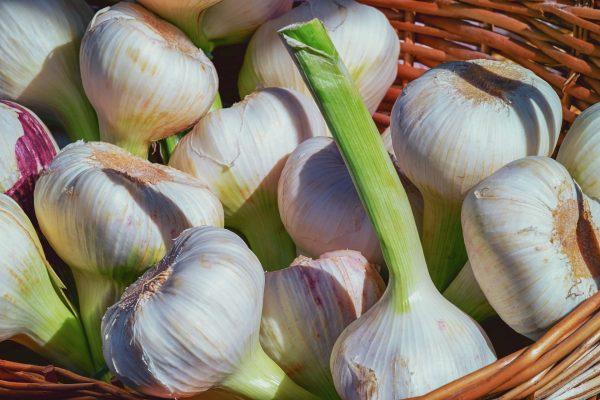 garlic-3471701_1920