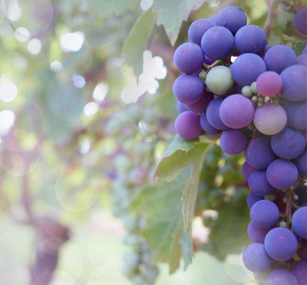 grapes-2180685_1920-1