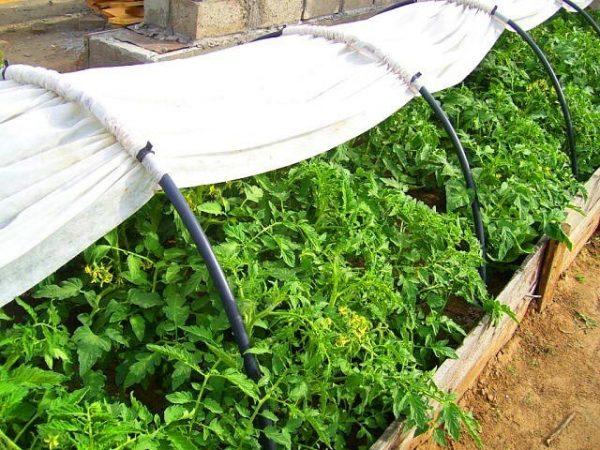 Укрывать растения агроволокном