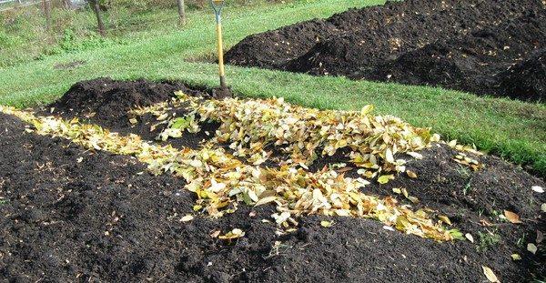 Оставляем листья в огороде