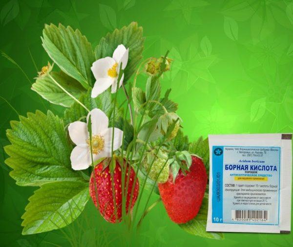 Борная кислота - удобрение для клубники