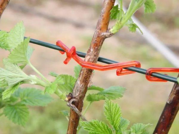 Подвязка стеблей