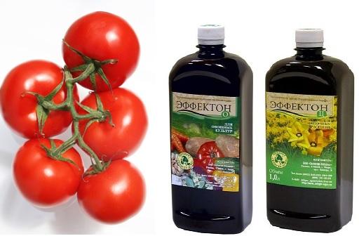 poliv_pomidorov7