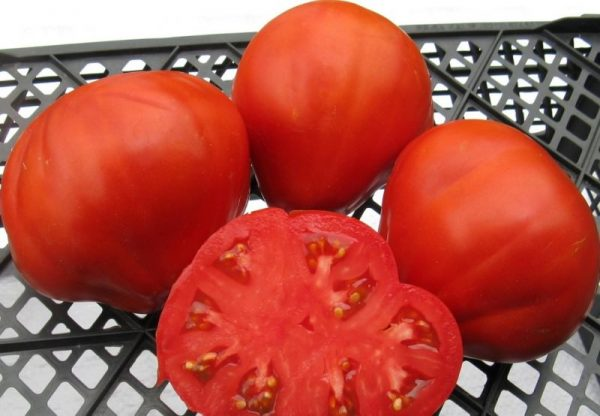 pomidor4-1