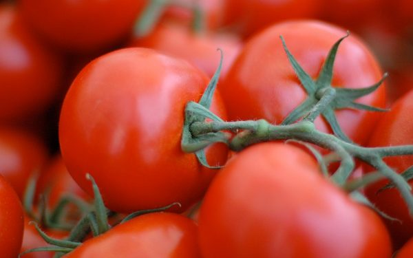 pomidor8