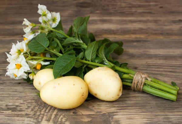 potato7-1