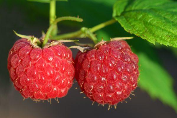 raspberry-3454504_1920-1