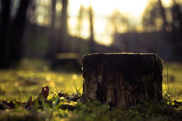 stump-933702_1920