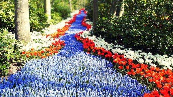 Сухой ручей из цветов