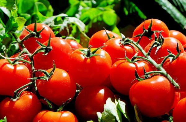 tomatoes-1280859_1280-1
