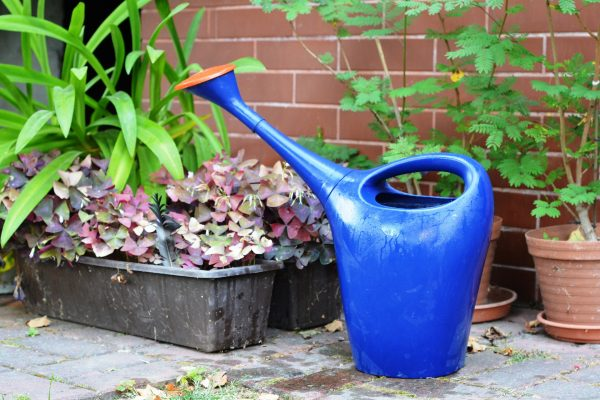 watering-can-887714_1920