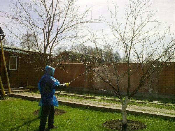Обработка кустарников