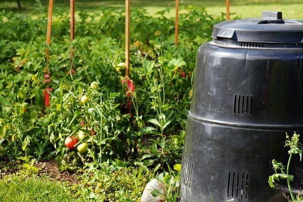 Ботва томатов для компоста