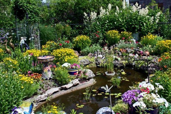 Экзотические растения возле пруда в саду