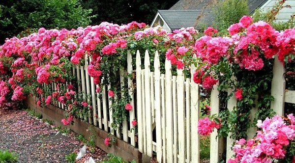 Как скрыть некрасивый забор