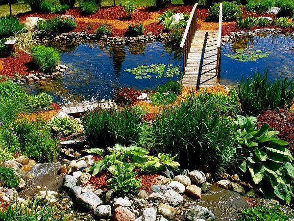 Растения для оформления пруда, водоема в саду