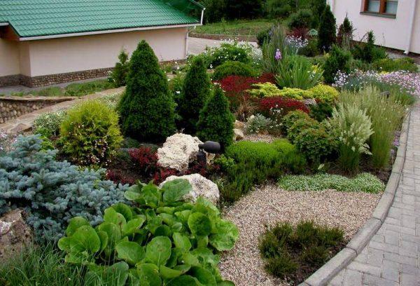 Растения на маленьком участке