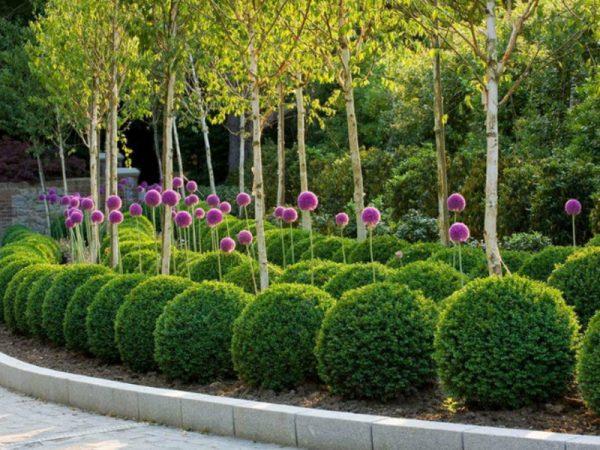 Шарообразные кусты в саду