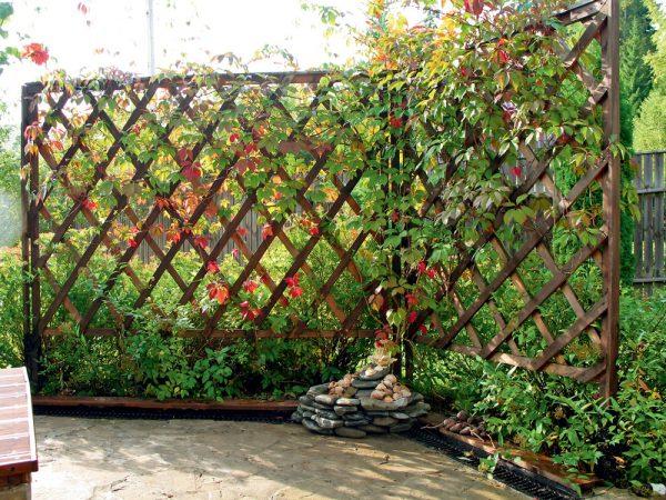 Шпалера для вертикального озеленения