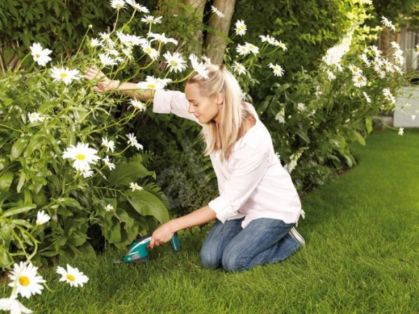 Использование садовых ножниц
