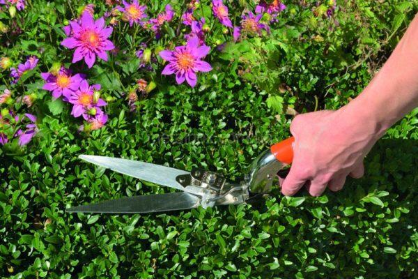 Садовые ножницы для стрижки травы