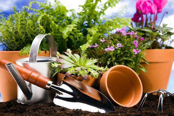Уход за растениями в вазонах