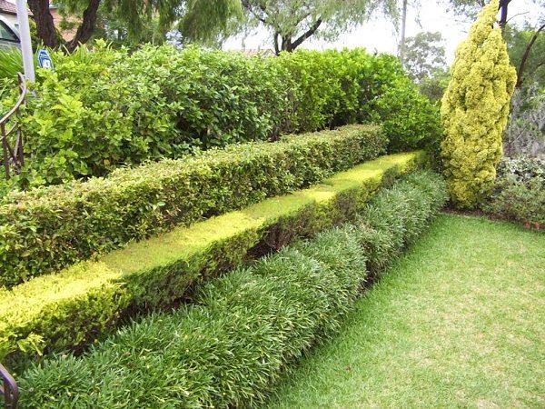 Живая изгородь: образы для зеленого забора
